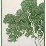 Tree (47cm x 70cm) - Cactus